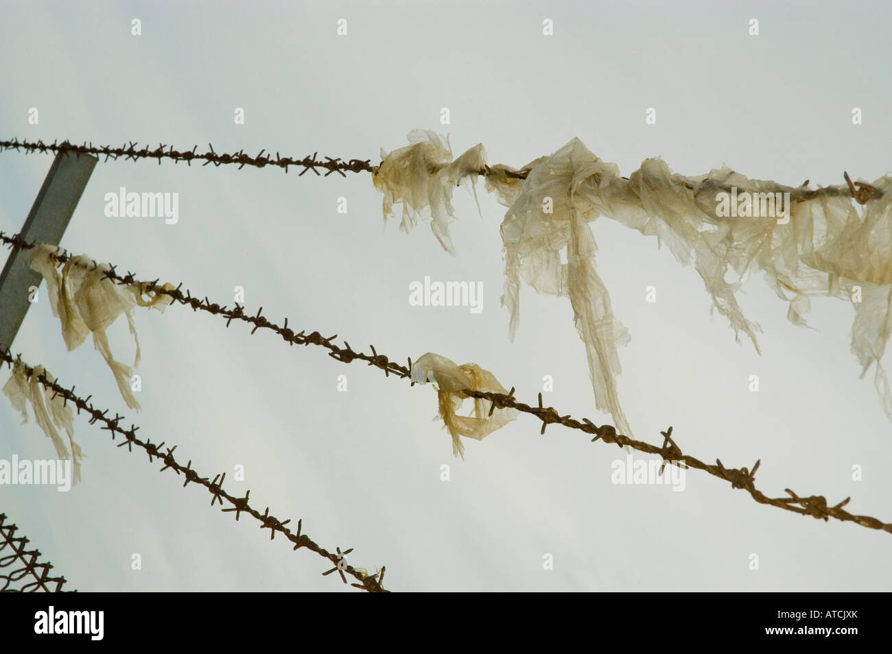 Plastic bags on barbed wire Stock Photo: 16275930 - Alamy