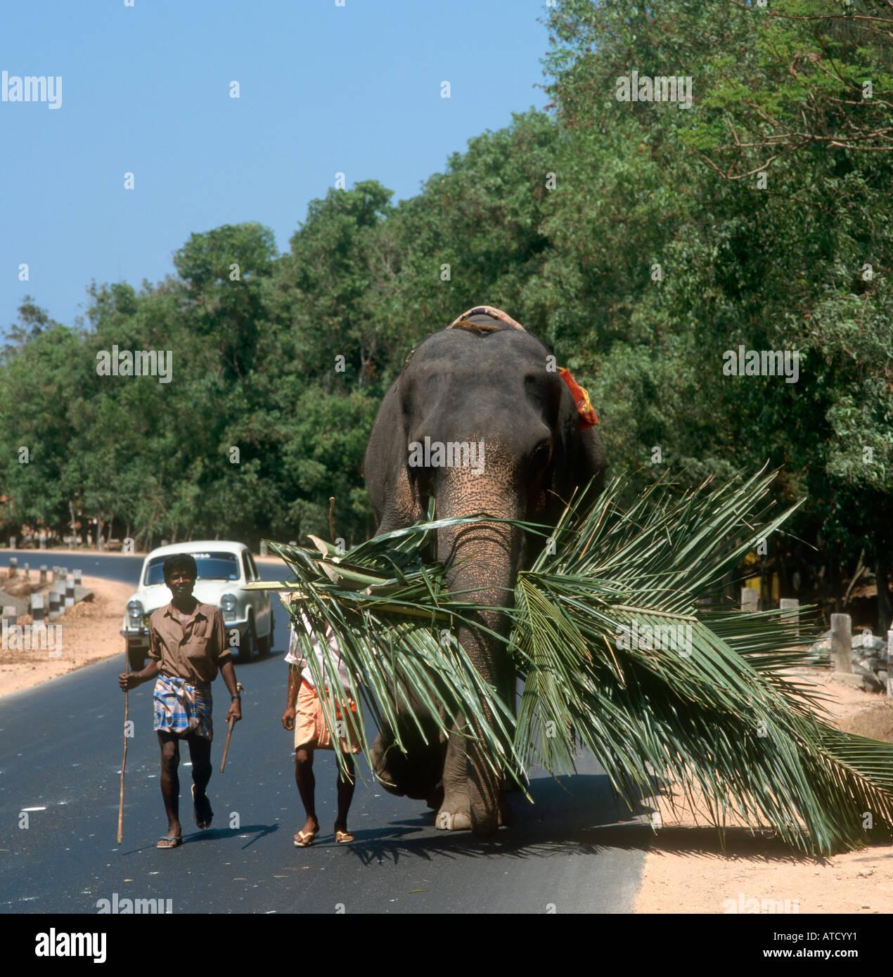 Elephant Cochin Stock Photos & Elephant Cochin Stock ...