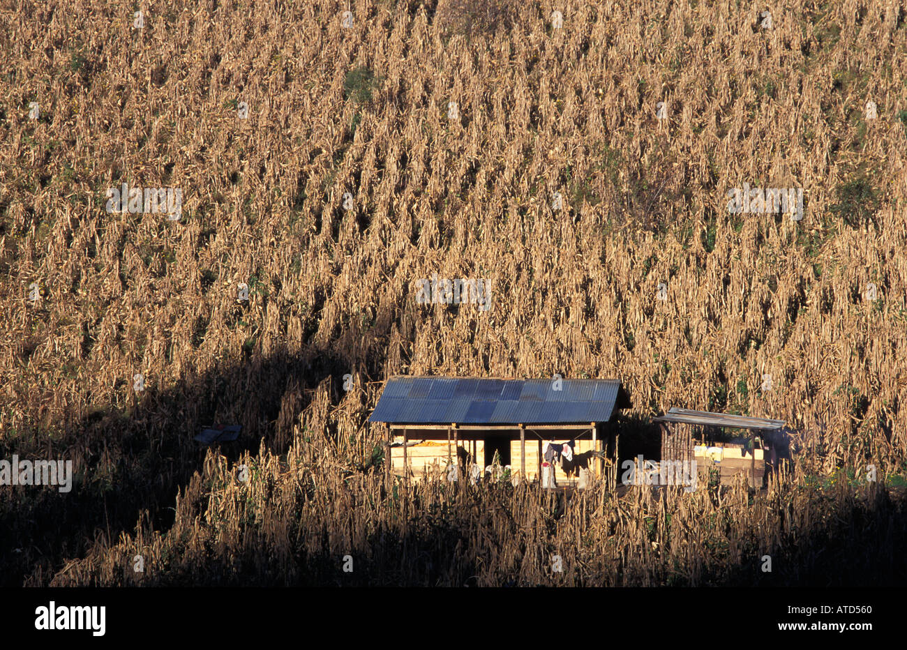 Maya home in the middle of a cornfield Chajul to Nebaj road Ixil Triangle Guatemala A typical scene - Stock Image