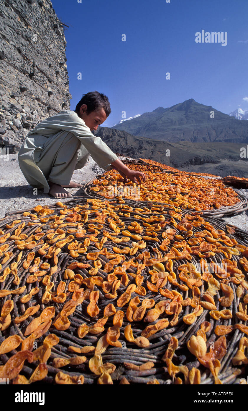 Apricots laid out in flat baskets to dry in the baking Himalayan sun Karakoram Mountains Altit Fort Karimabad Pakistan - Stock Image