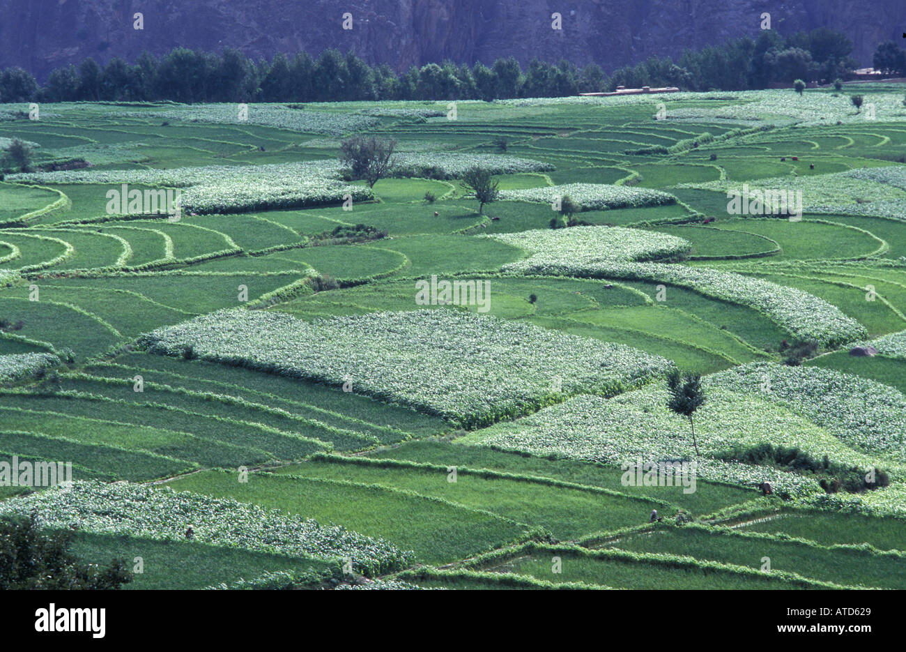 Green patchwork of agricultural fields of the Swat valley near Mingora Pakistan - Stock Image