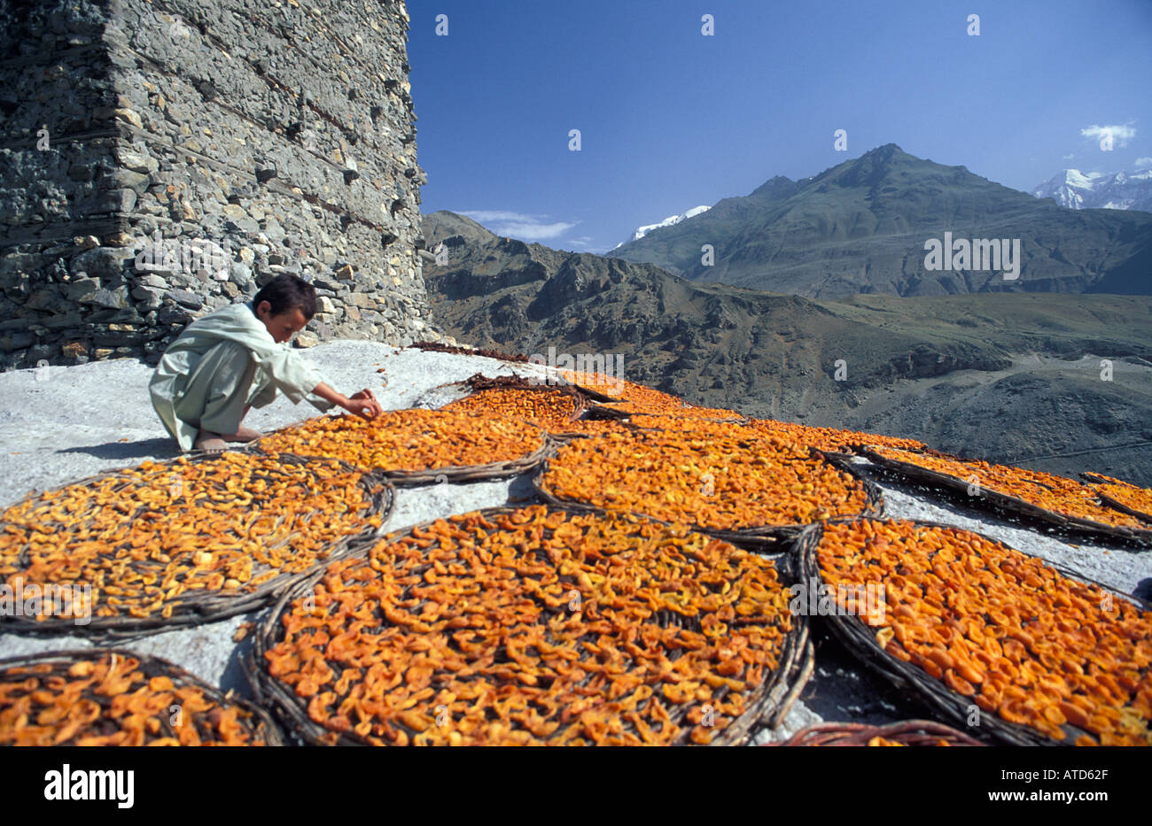 Apricots laid out in flat baskets to dry in the baking Himalayan sun Karakoram Mountains Altit Fort Karimabad Pakistan Stock Photo