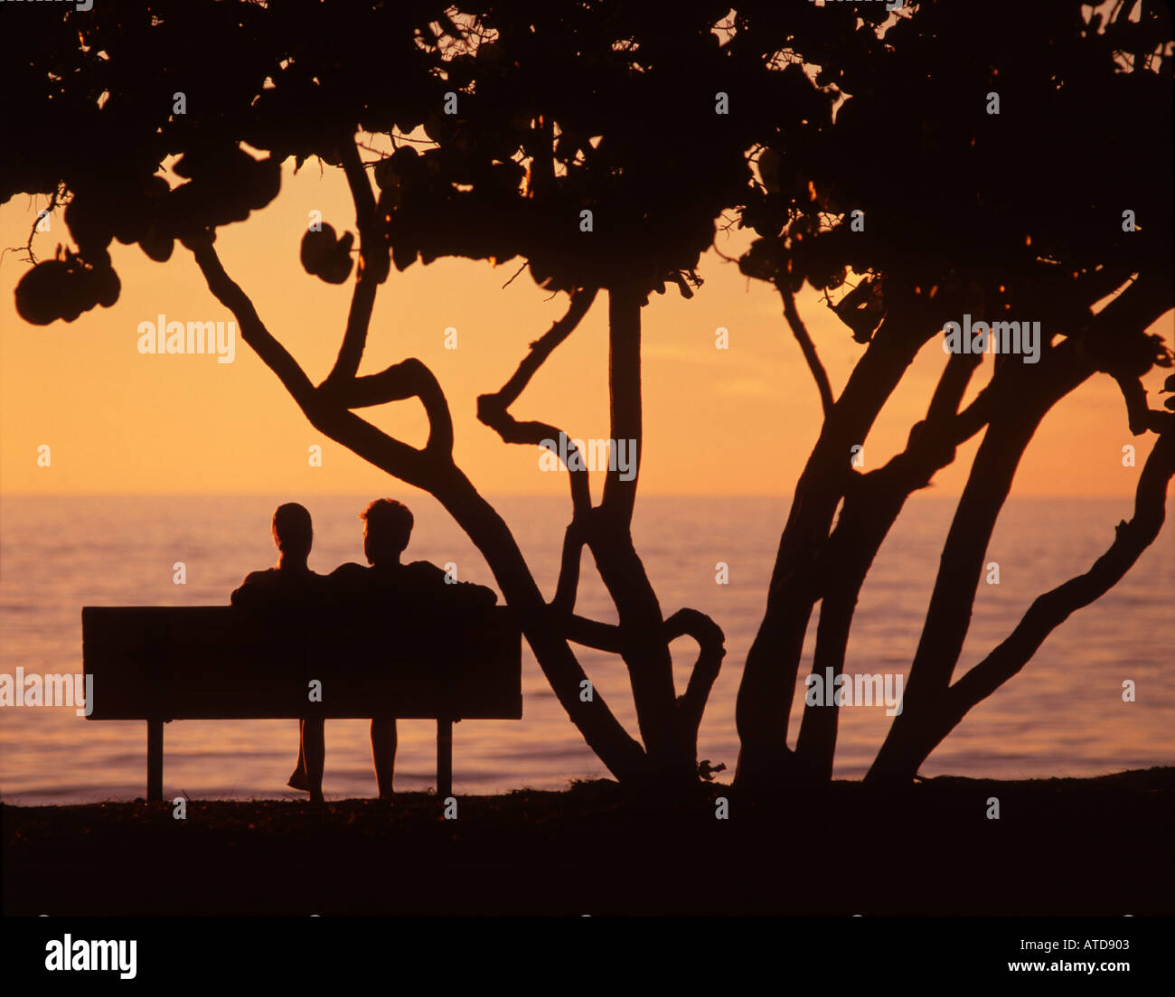 Silhouette of two people sitting on a park bench beneath a tree ... for People On Bench Silhouette  584dqh