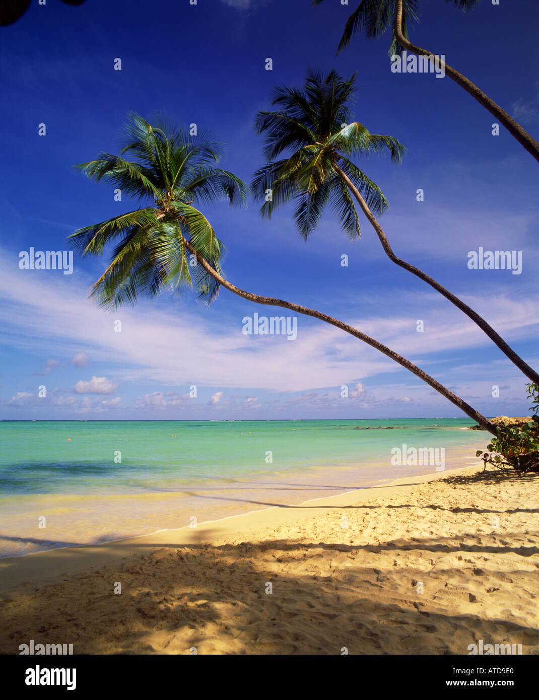 Palm trees lean over the white sand beach of Pigeon Point on the Caribbean island of Tobago - Stock Image