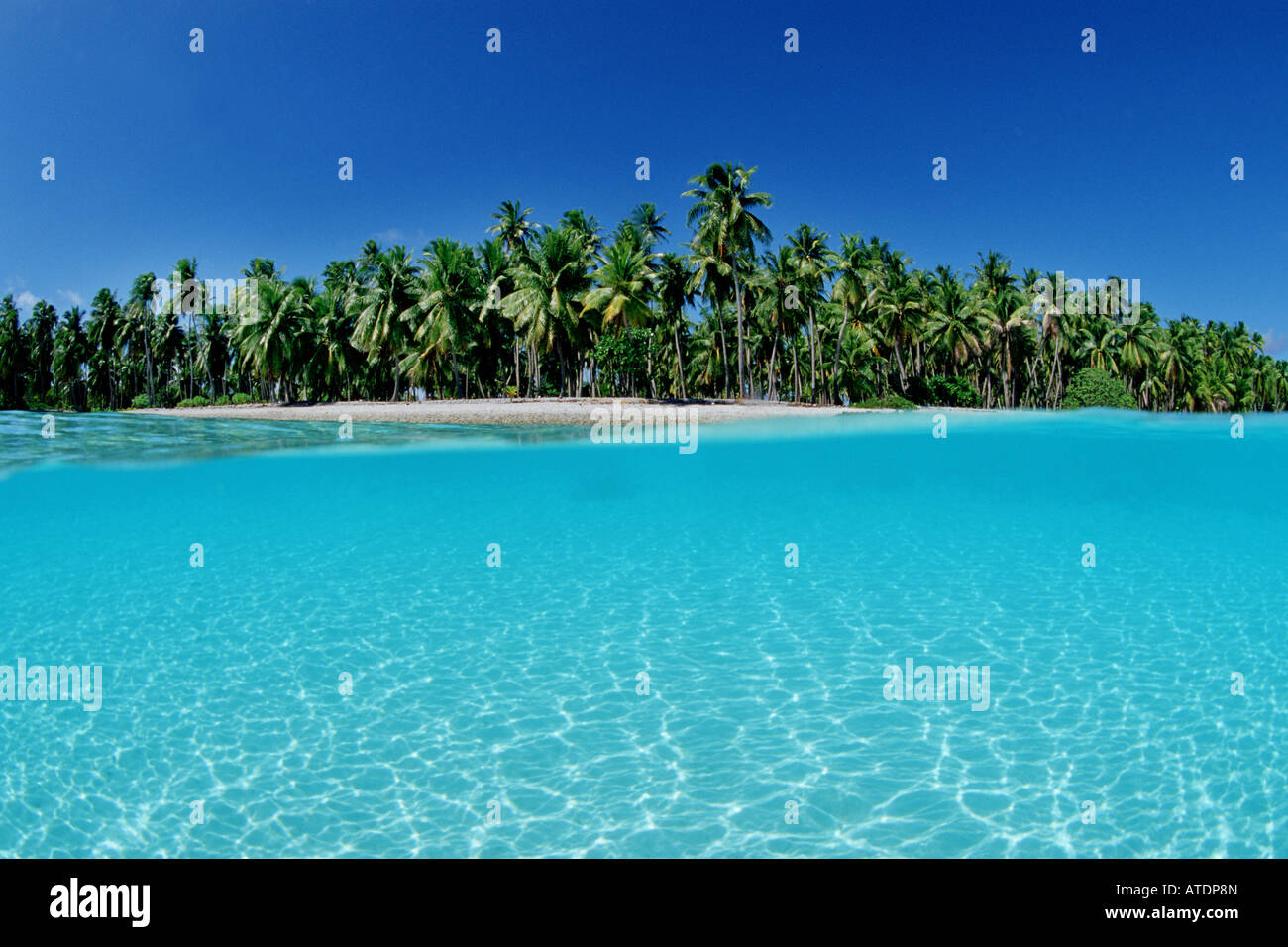 the tropical pacific is known for its scenic landscapes of palm