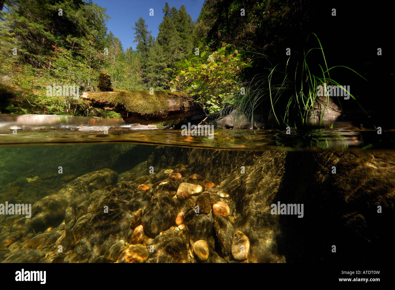 Steelhead Creek Umpqua National Forest Oregon - Stock Image