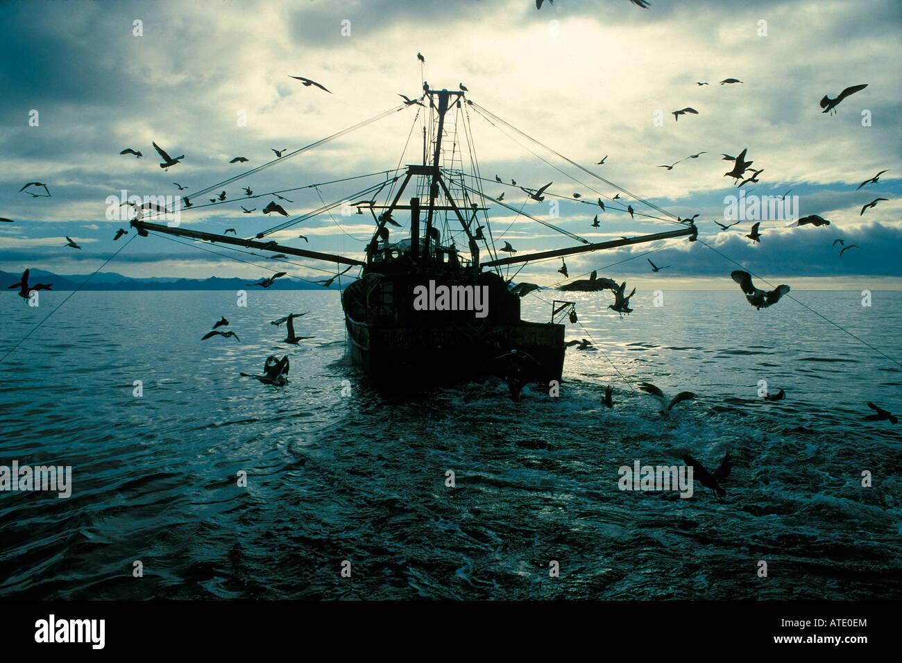 Shrimp commercial fishery using destructive otter trawl nets, Sea of Cortez, Mexico. - Stock Image