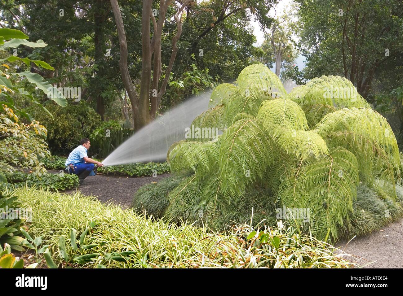 Gardener in the botanic gardens in Puerto de la Cruz Tenerife Canary Islands Spain - Stock Image