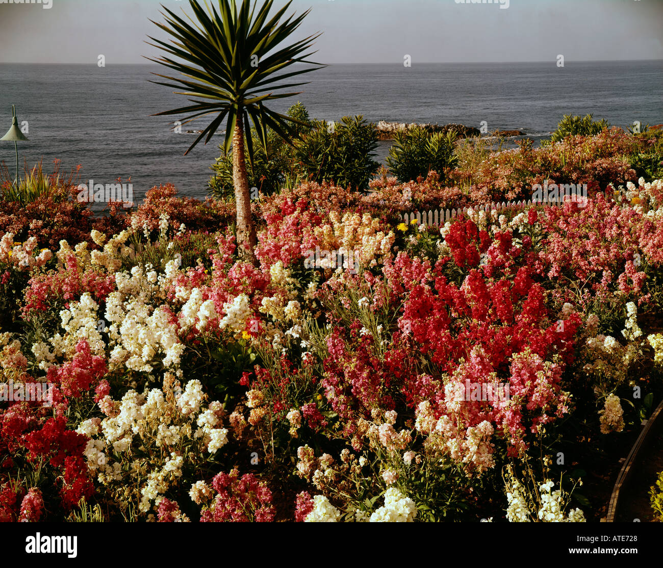 Oceanfront gardens at Laguna Beach in Southern California Stock ...