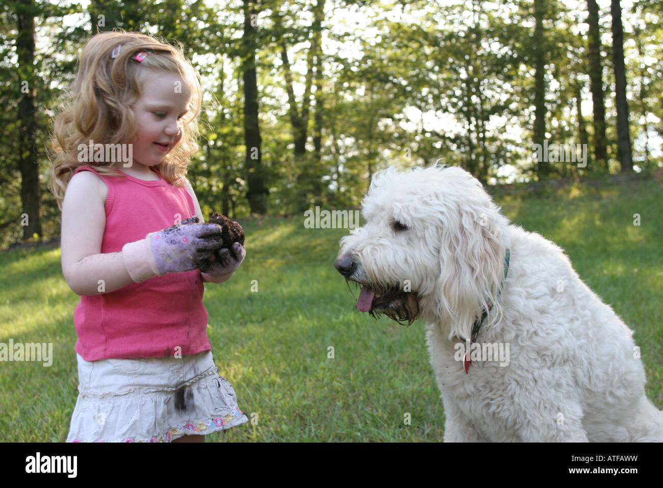 Two year olds enjoy messy play especially with willing friends like 3 year old Goldendoddle - Stock Image