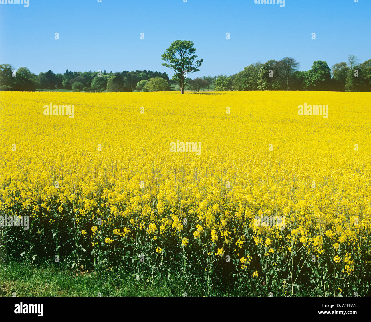 Field of flowers - Stock Image