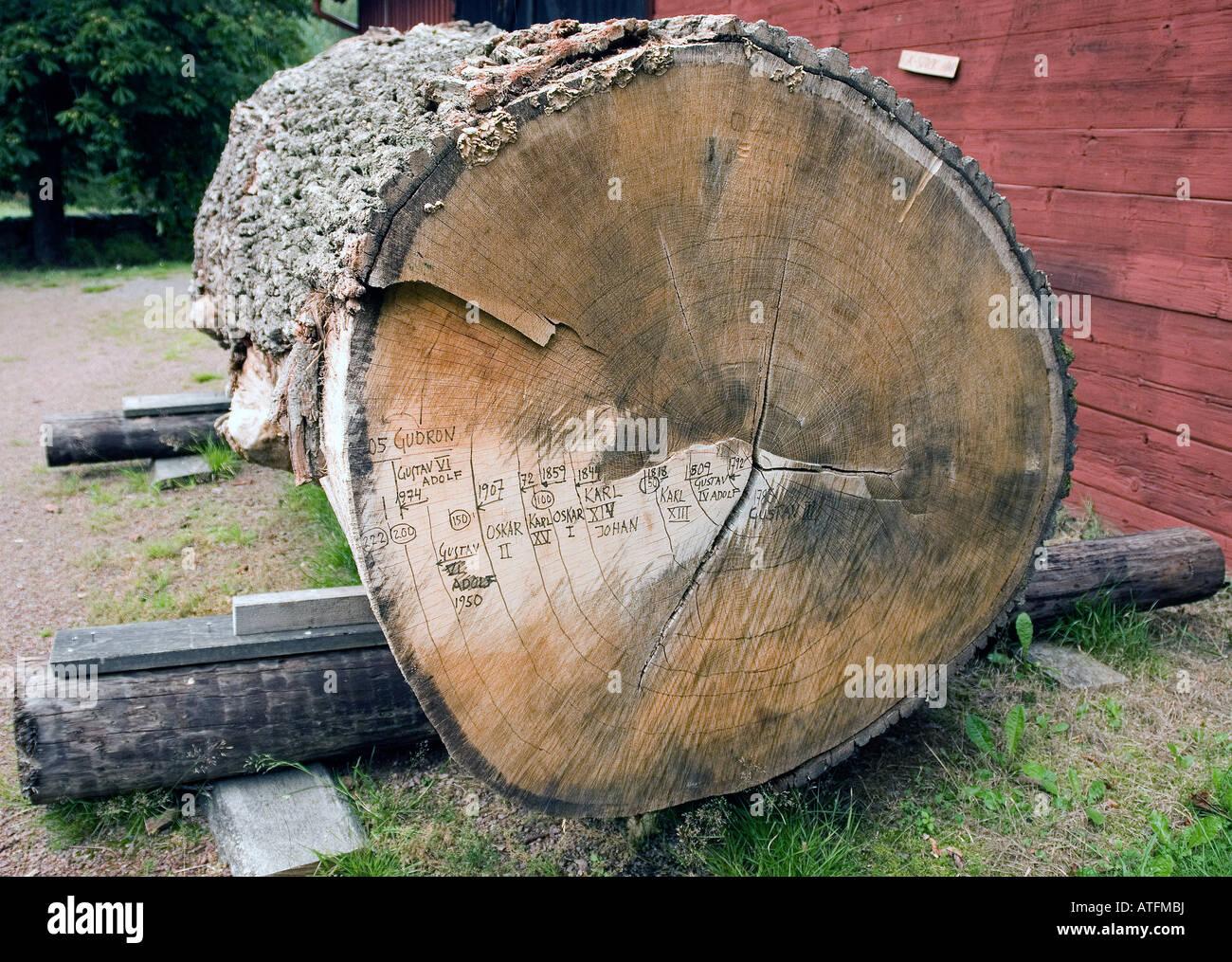 Historic log - Stock Image