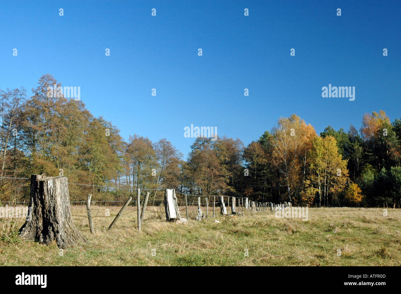 pastureland, polish countryside - Stock Image