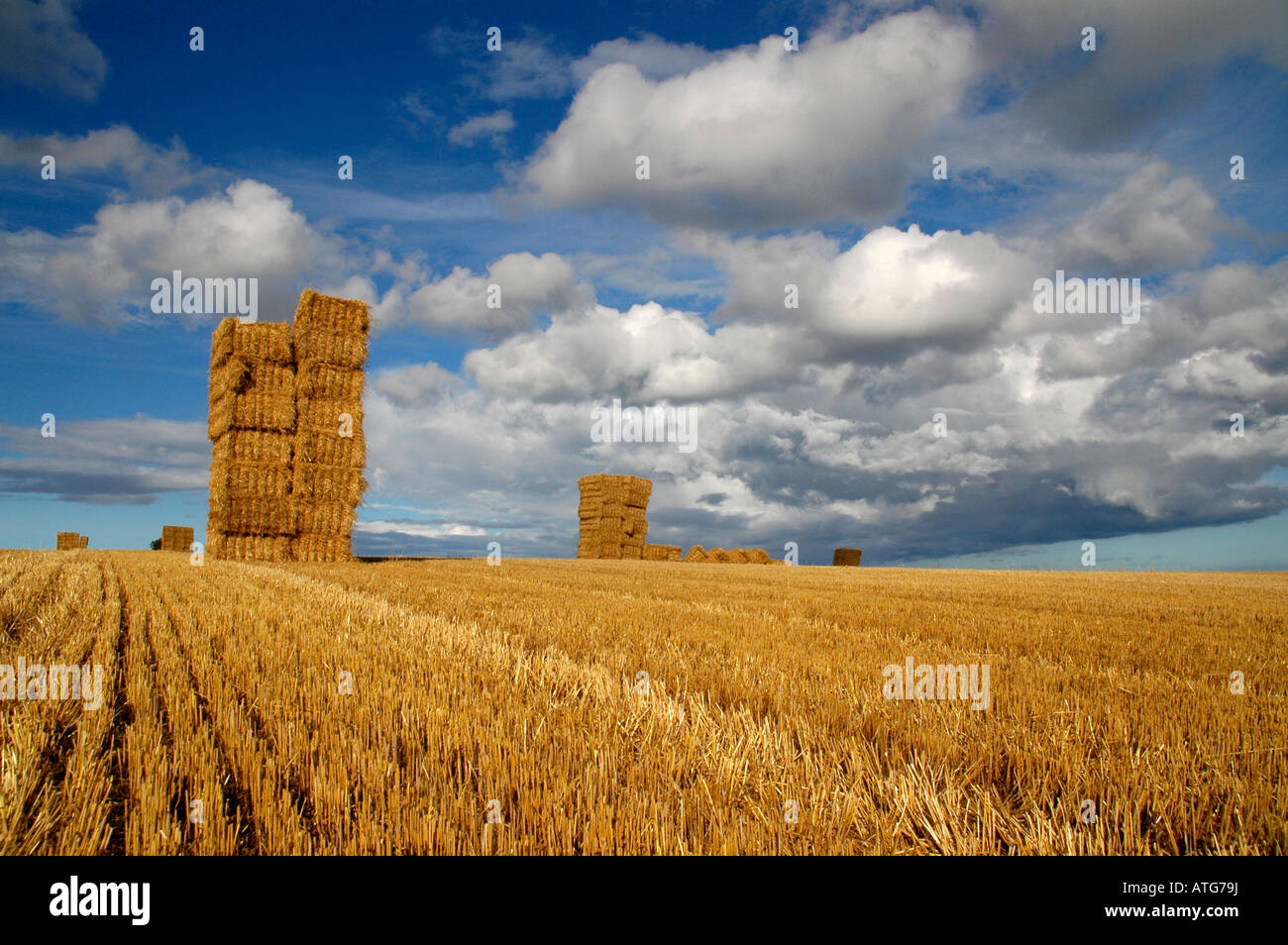 Huge towering haystacks sit under a summers sky in a hay stubbled field. - Stock Image