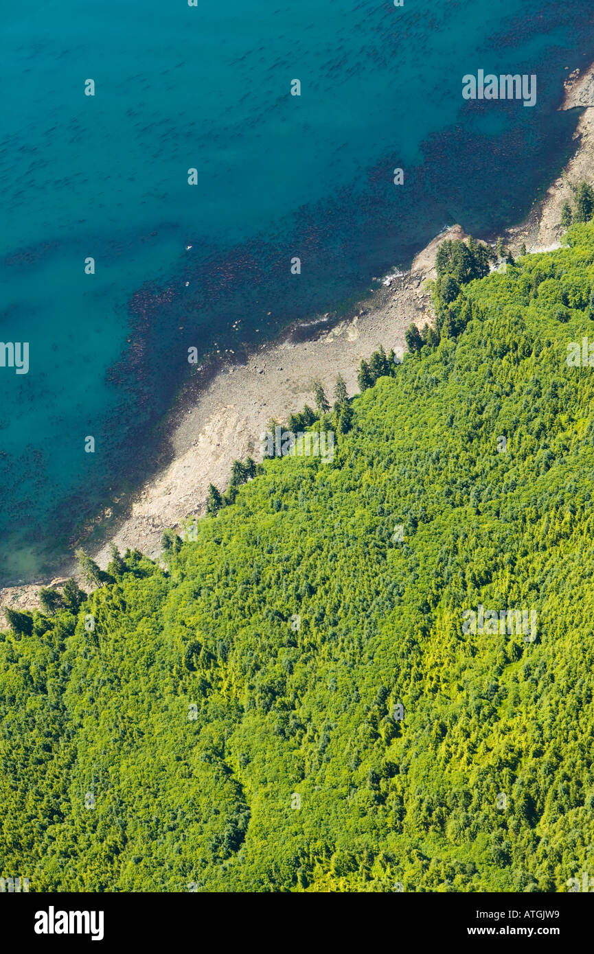Aerial View of Previously Logged Forest West Coast Vancouver Island British Columbia Canada - Stock Image