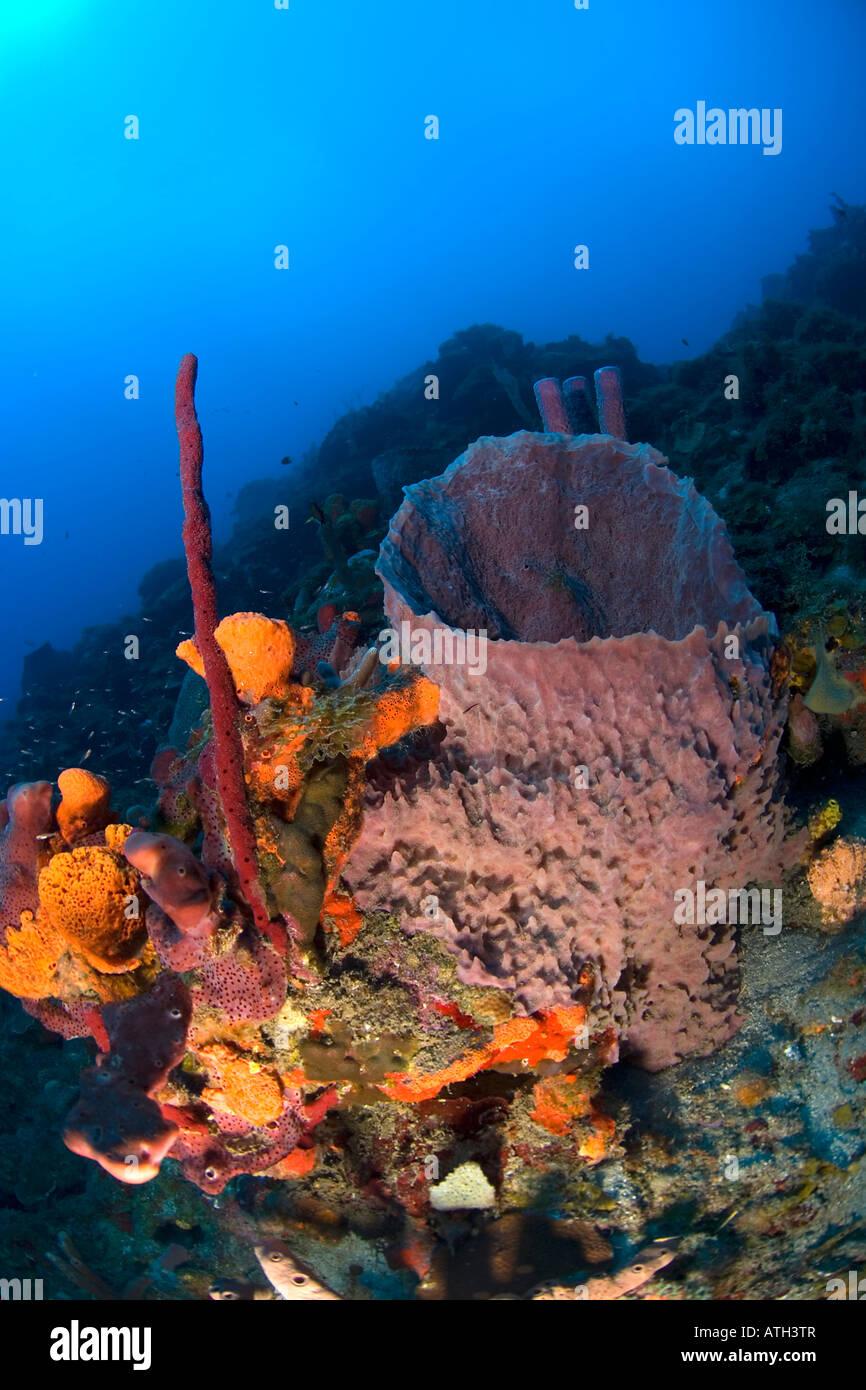 Coral Reef Saba Caribbean, Underwater, Scuba, Diving