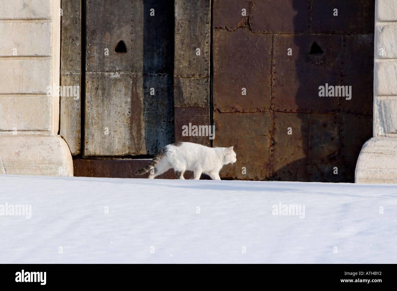 Cat in Rennaissance castle of Schloss Goldrain, Italy Stock Photo