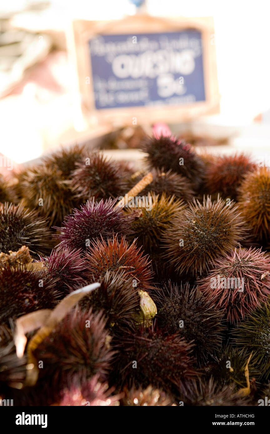 Sea urchins for sale Southern France 2007 - Stock Image