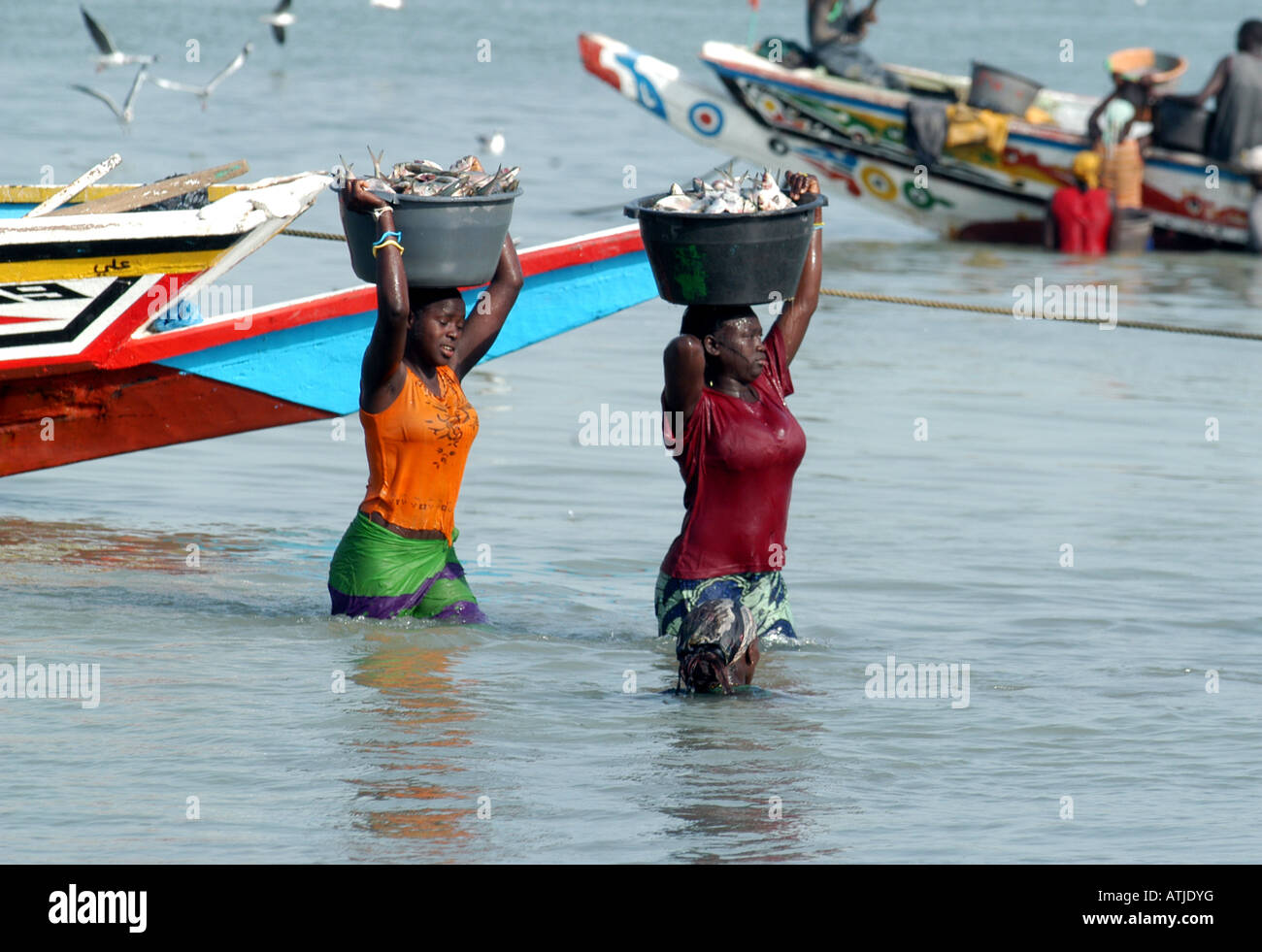 WOMAN UNLOADING THE CATCH IN TANJI. A FISHING VILLAGE IN THE GAMBIA WEST AFRICA. Stock Photo