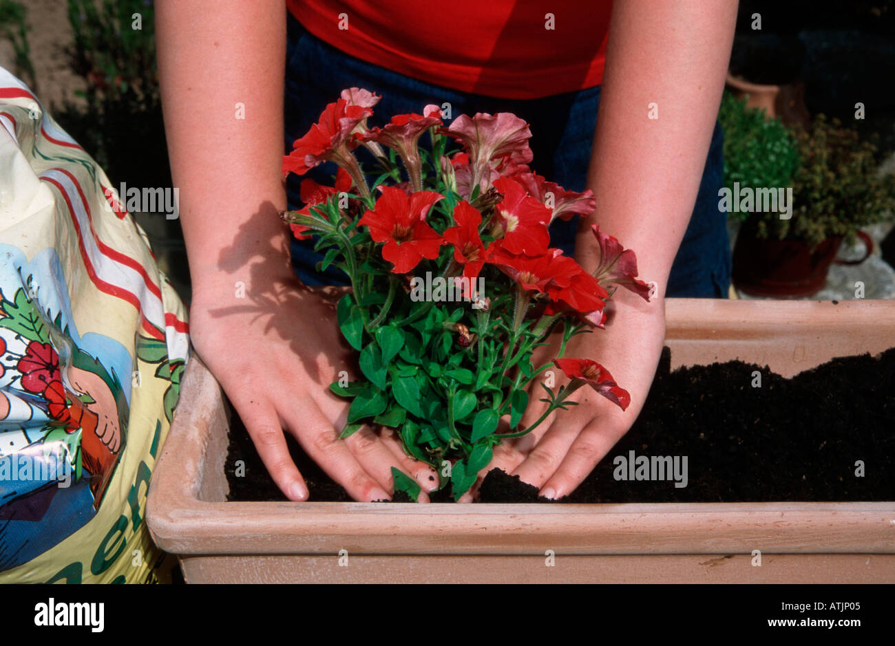 Window box - Stock Image