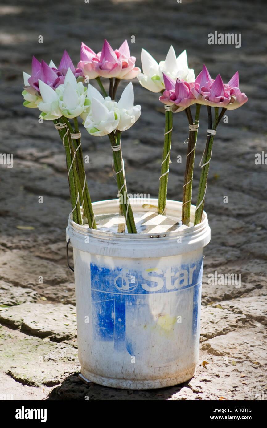 Lotus Flowers Buy Stock Photos Lotus Flowers Buy Stock Images Alamy