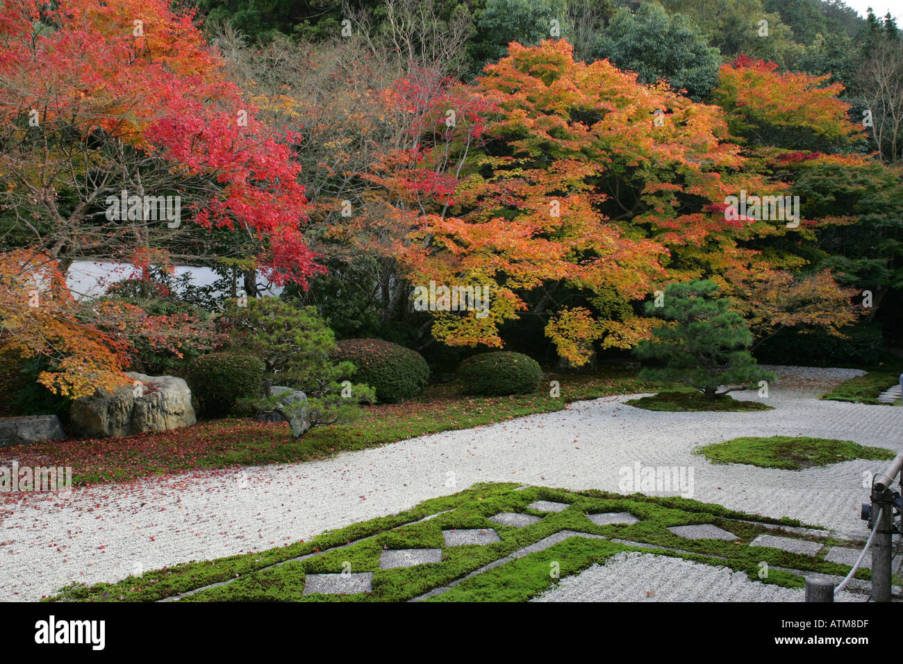 Iconic autumn fall leaves in a traditional Japanese Zen garden in ...