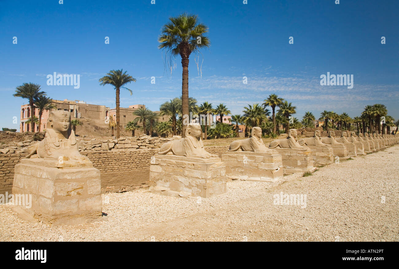 Avenue of Sphinxes at Luxor Temple Egypt North Africa - Stock Image
