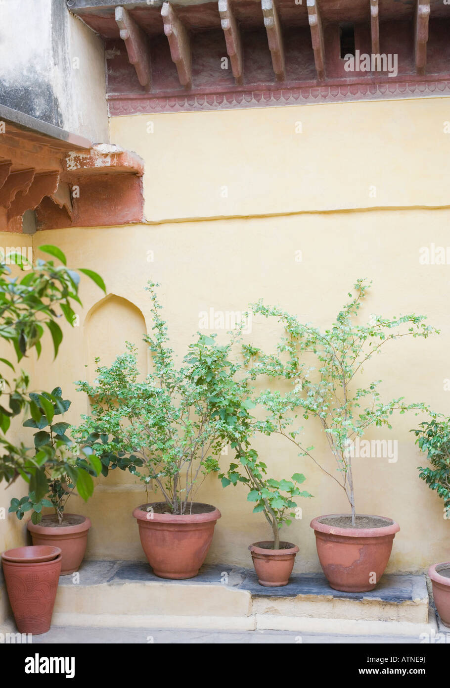 Potted plants in front of a wall - Stock Image