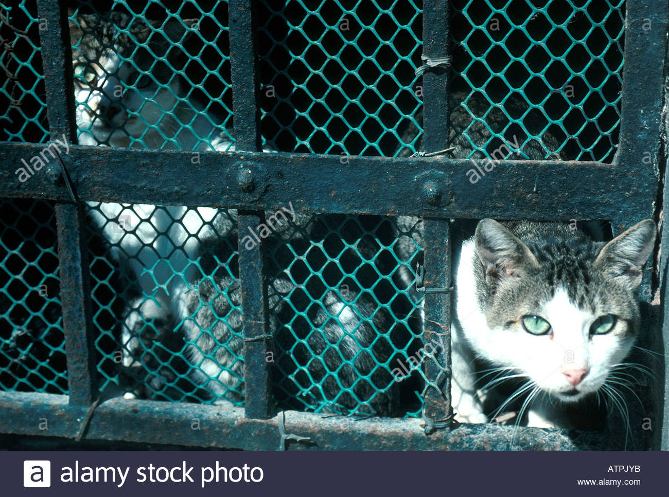 Cat Head in the Hole of Fence Stock Photo: 9354298 - Alamy