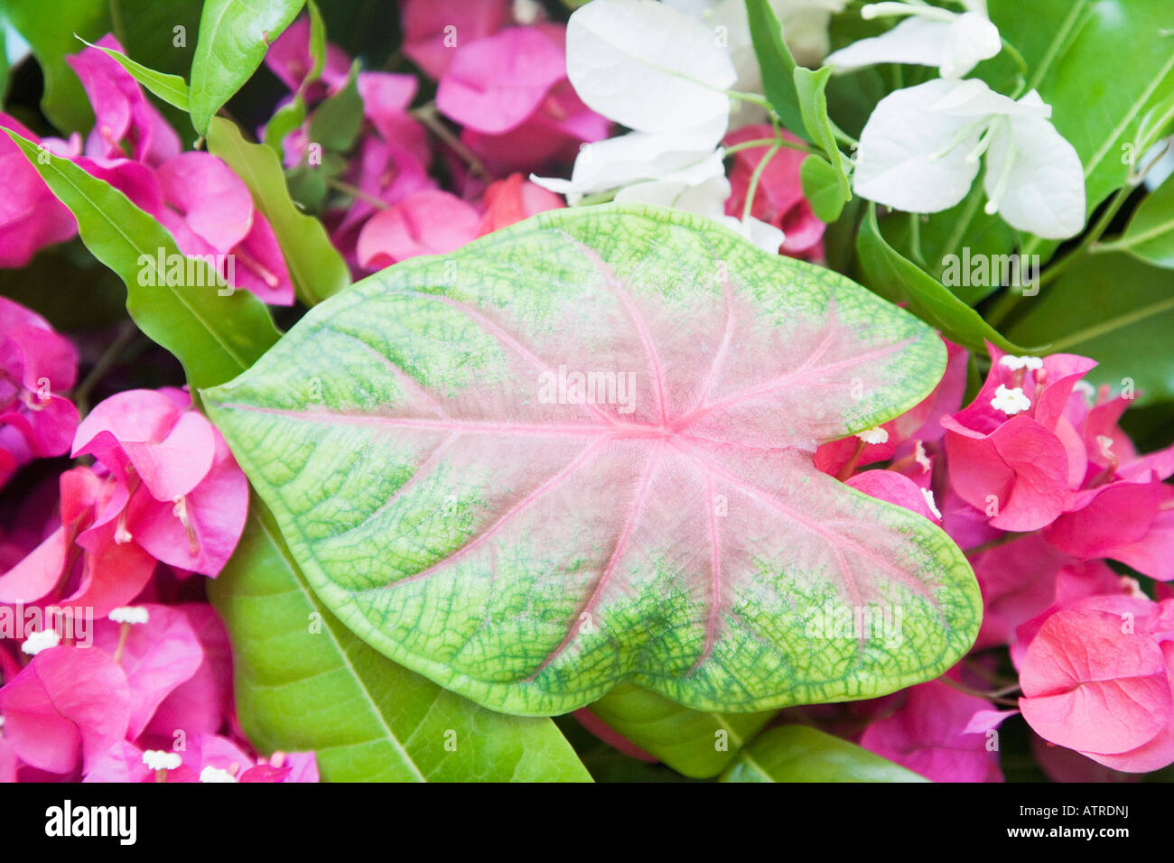 Close-up of leaves and flowers Stock Photo