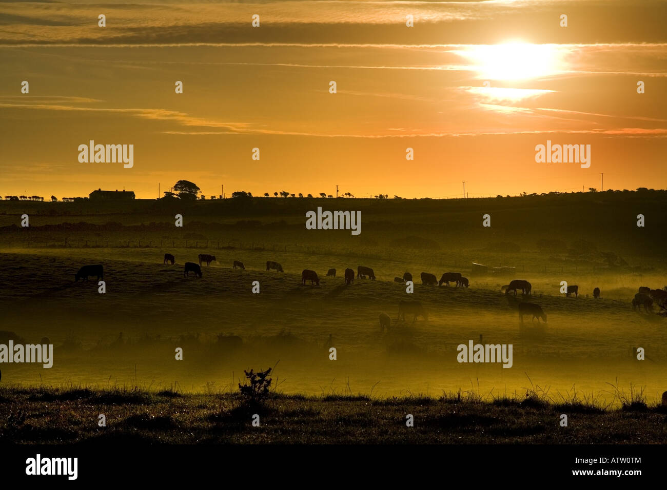 Golden Pastures in Co. Down. - Stock Image