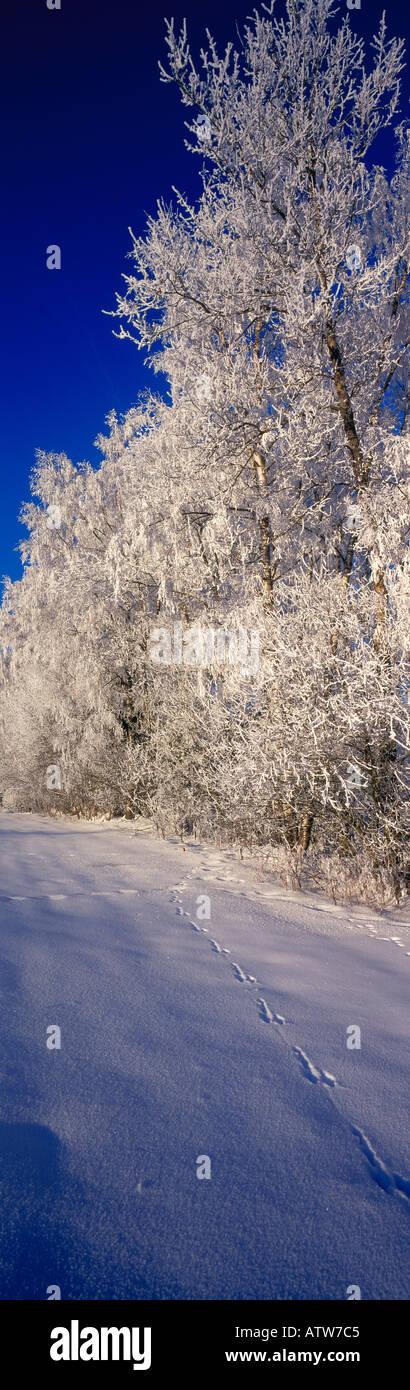 POV. 6x17 panoramic photo.Winter wonder land Bavarian Forest Bavaria Germany Europe. Photo by Willy Matheisl Stock Photo
