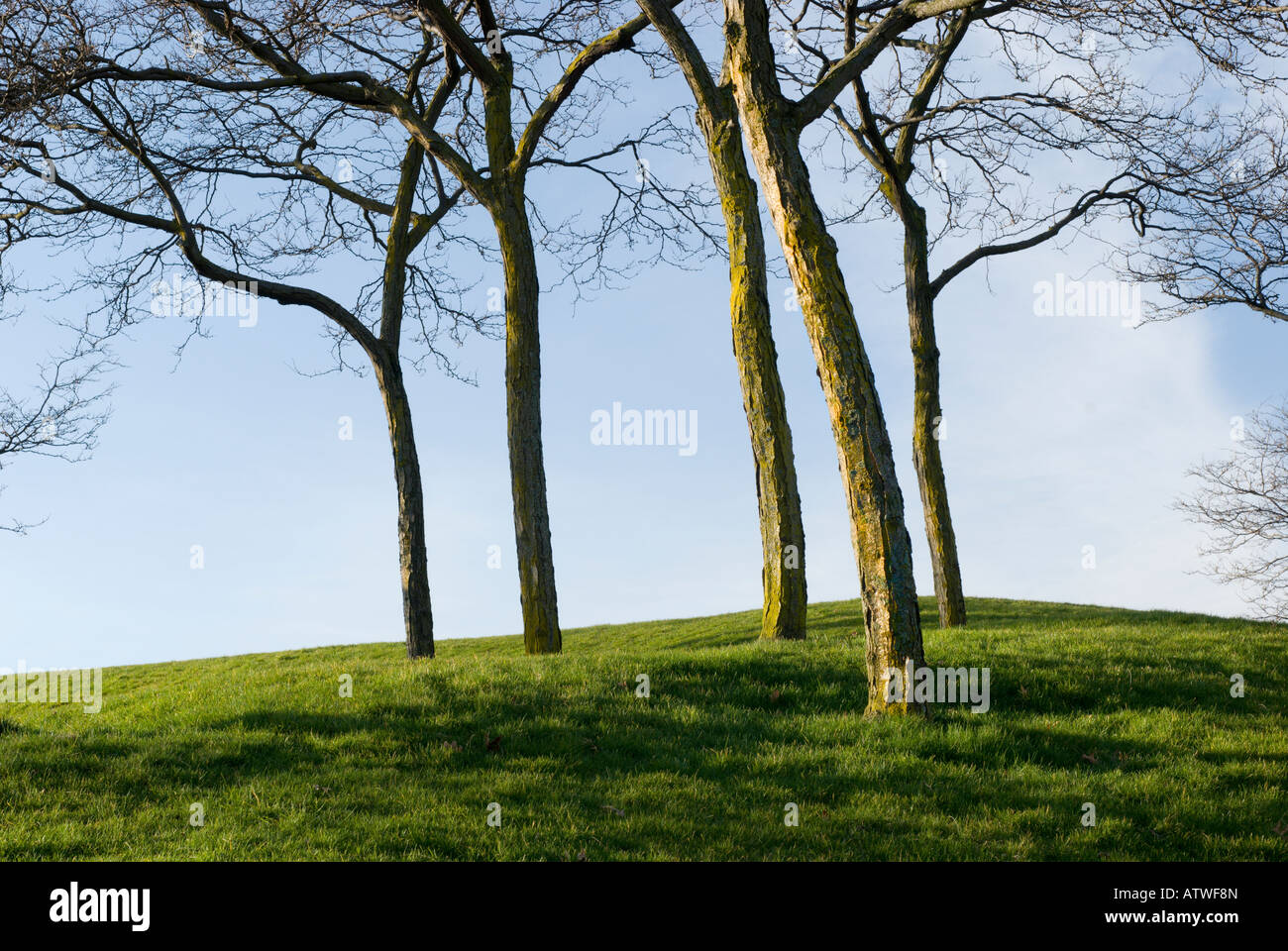 Grassy knoll with tree trunks and leafless branches - Stock Image