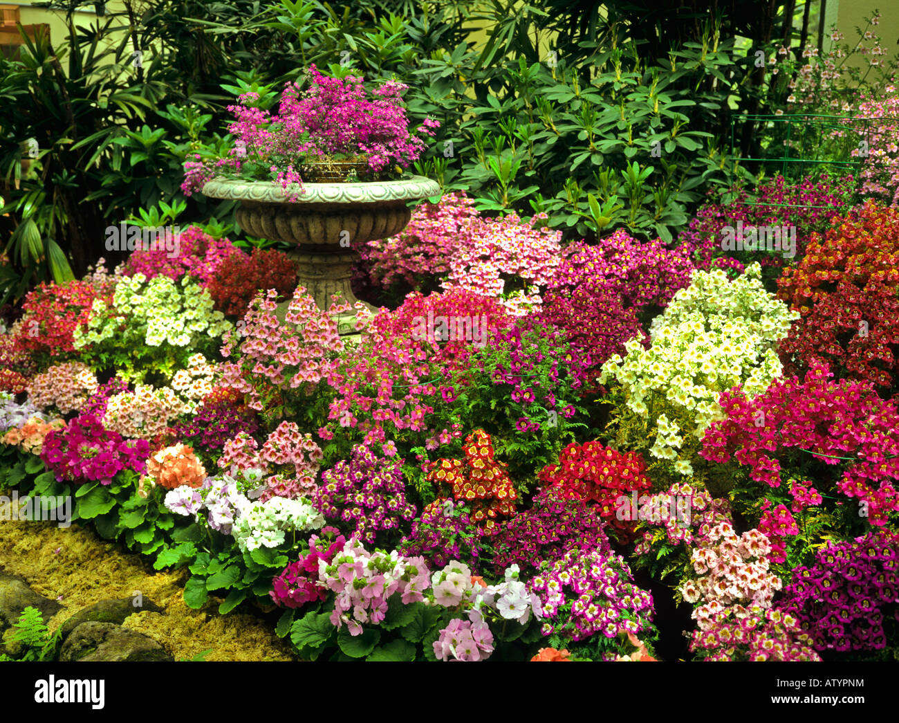 Colorful Spring Display Of Flowers In Fitzroy Gardens Melbourne