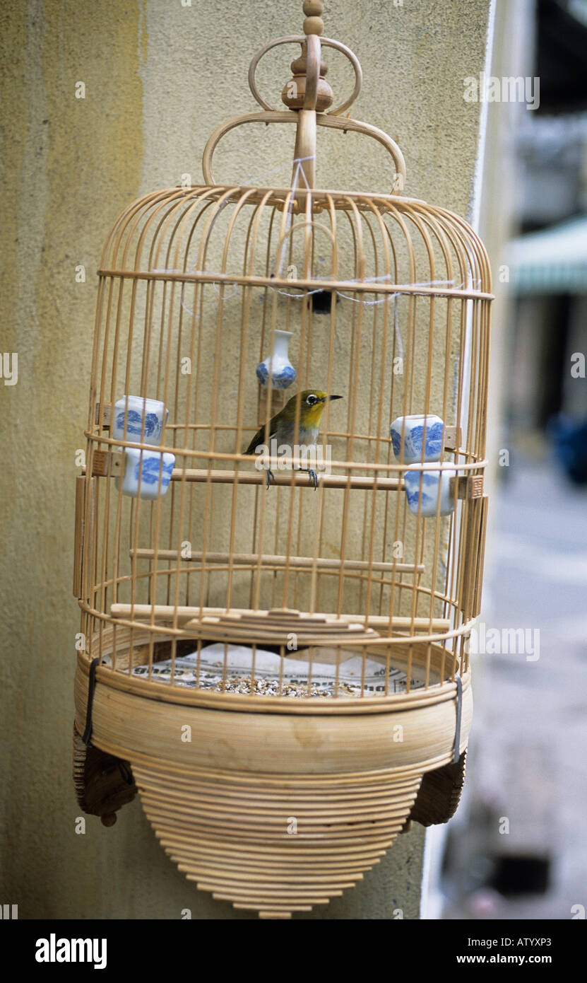 A Song Bird In A Wooden Cage Hanging From The Wall In Hanoi S Old