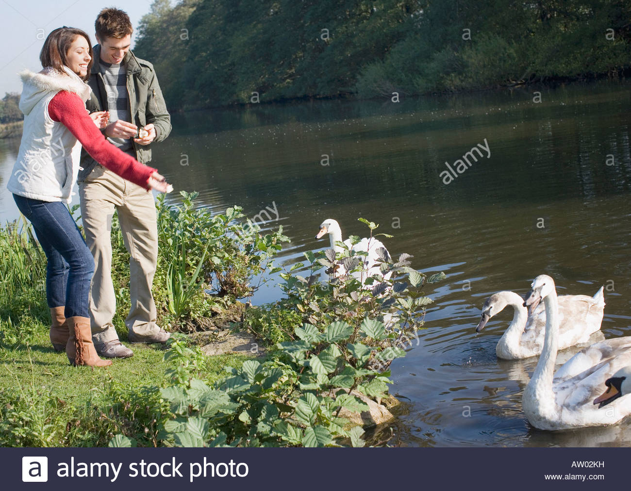 Couple outdoors feeding swans in a lake Stock Photo