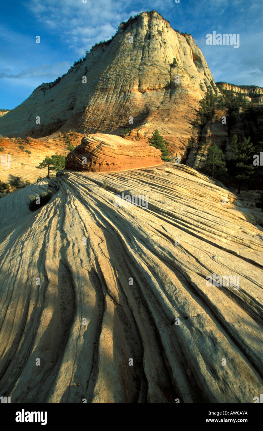 Zion national park Utah United States of America North America - Stock Image