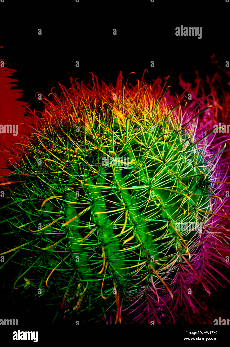 A Barrel Cactus light painted in red and green and yellow at night. - Stock Image