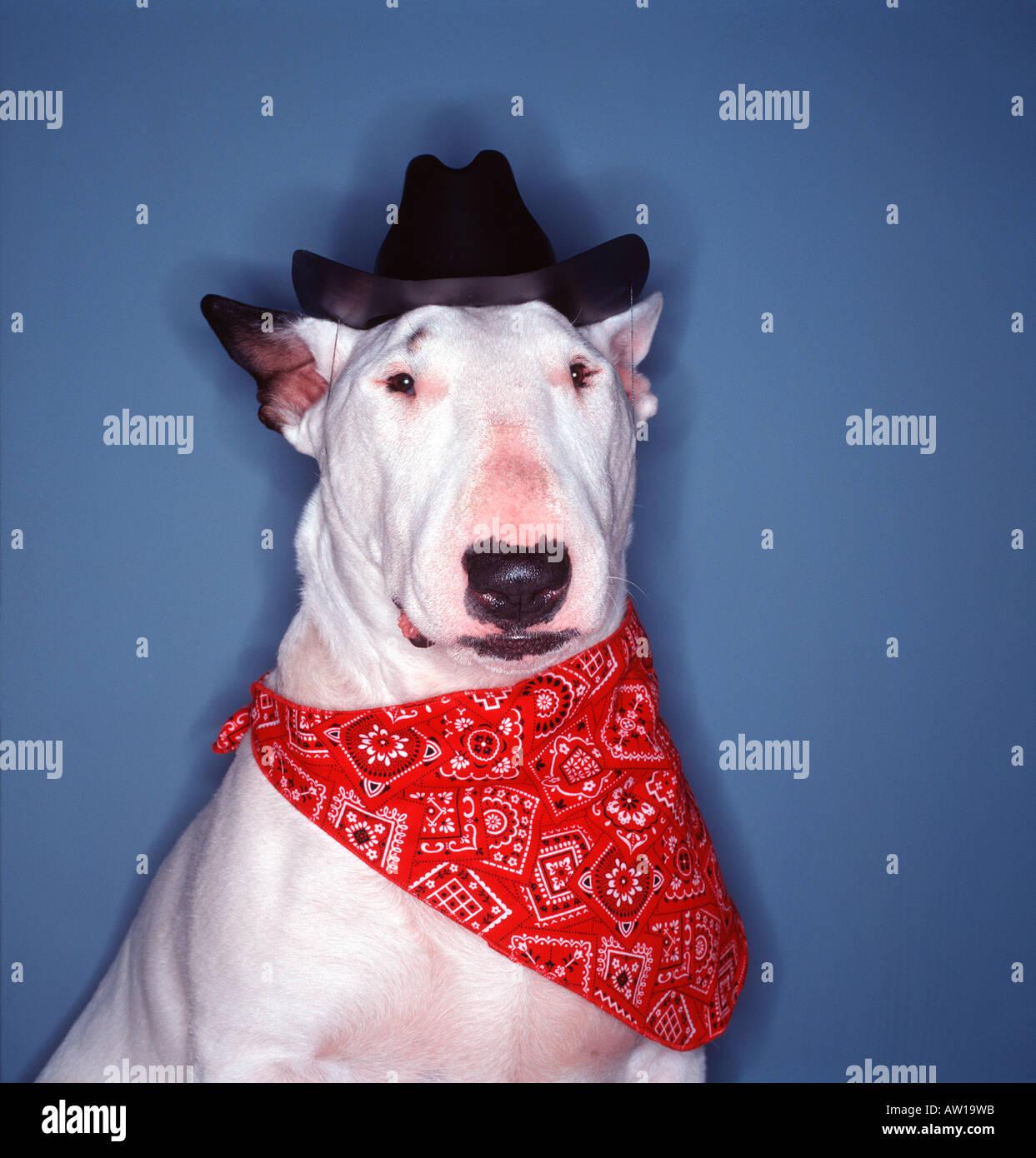 Dog Wearing Cowboy Hat and Bandana Stock Photo