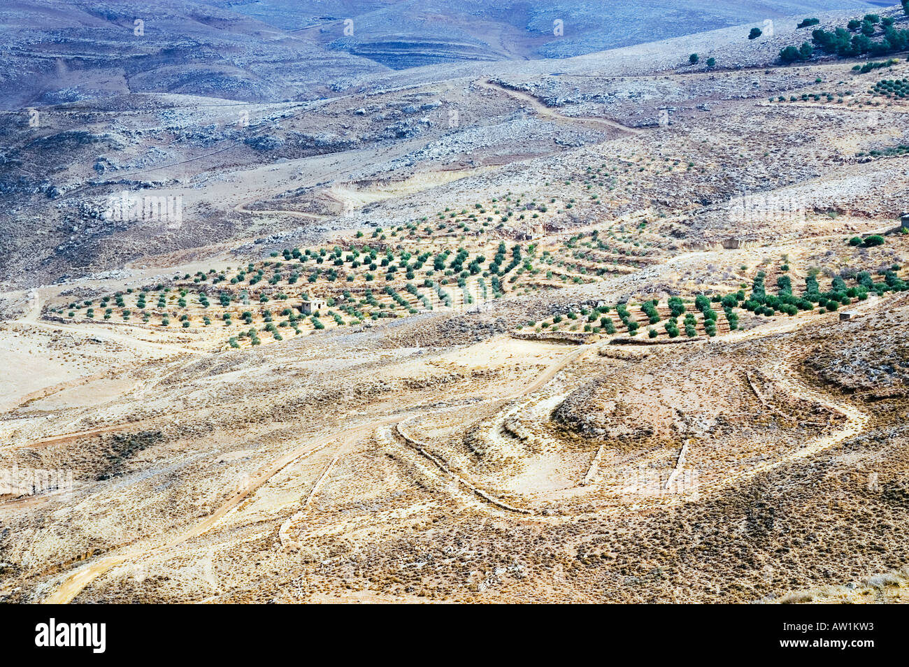 Jordan Mount Nebo near the town of Madaba valley of the river Jordan plantation Stock Photo
