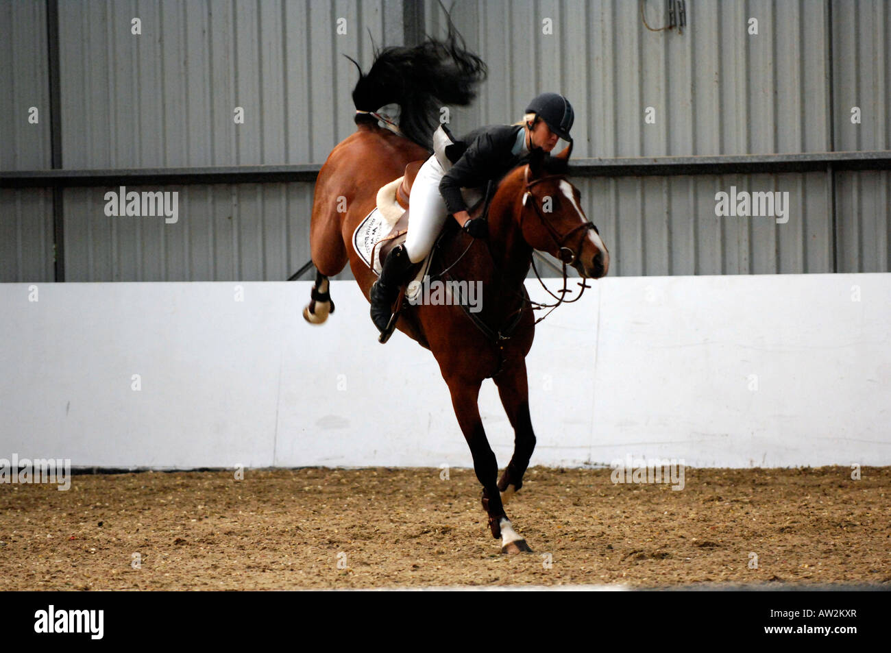 a showjumping horse bucking and trying attempting to through the rider competitor during a competition round in - Stock Image