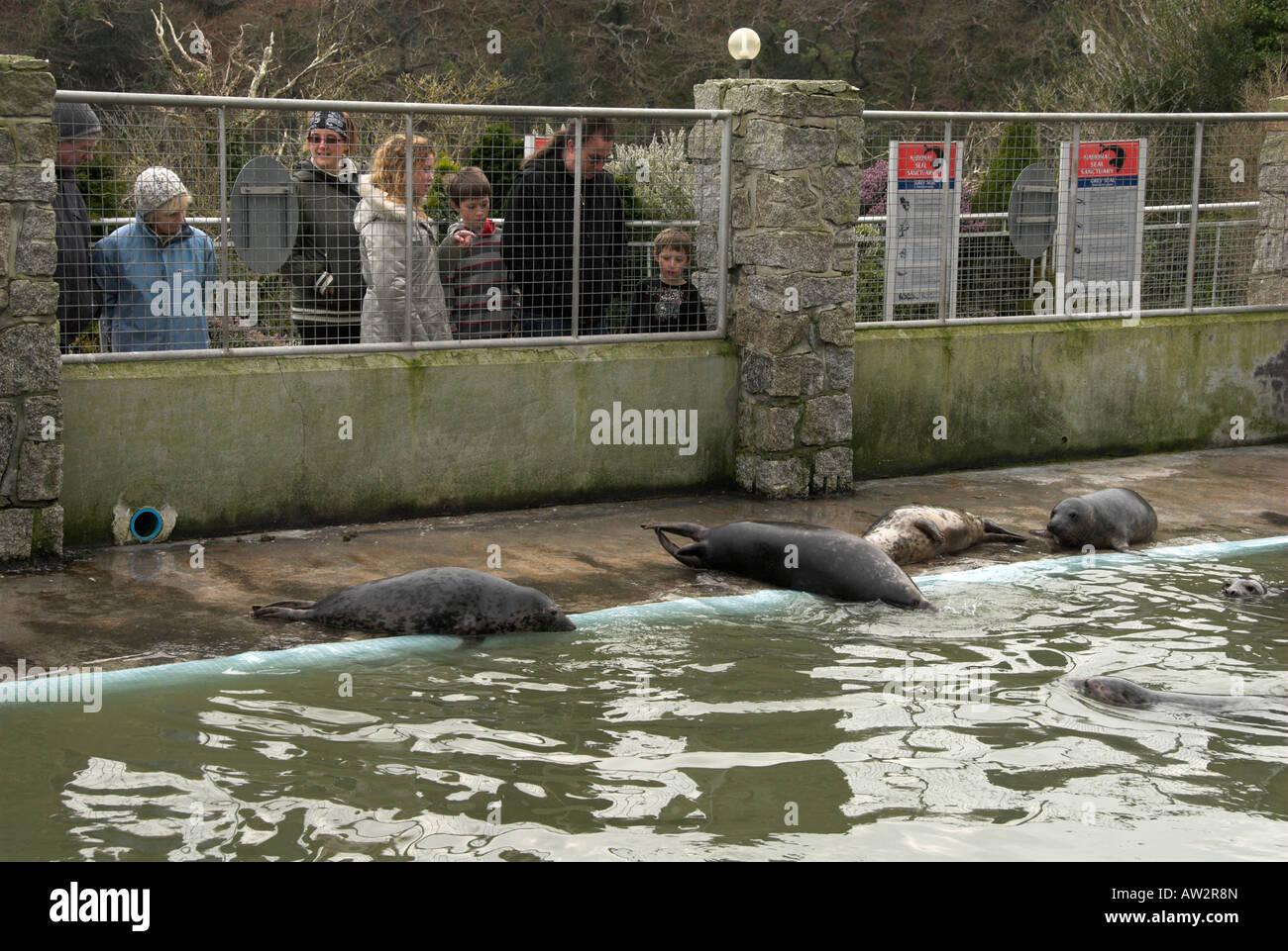 seals at seal sanctuary Gweek Cornwall England UK Stock Photo