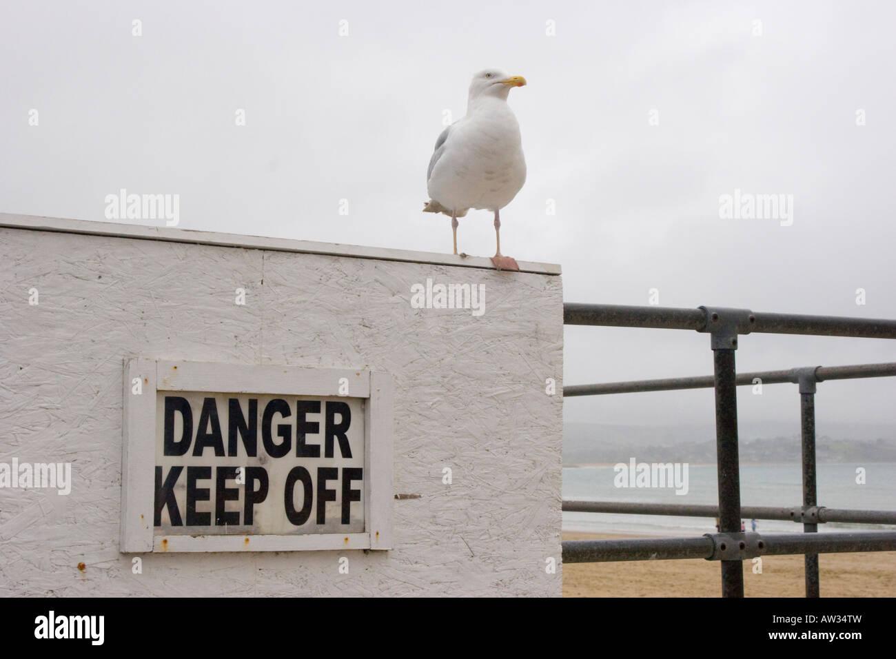 Seagulls ignoring a danger keep off warning sign - Stock Image