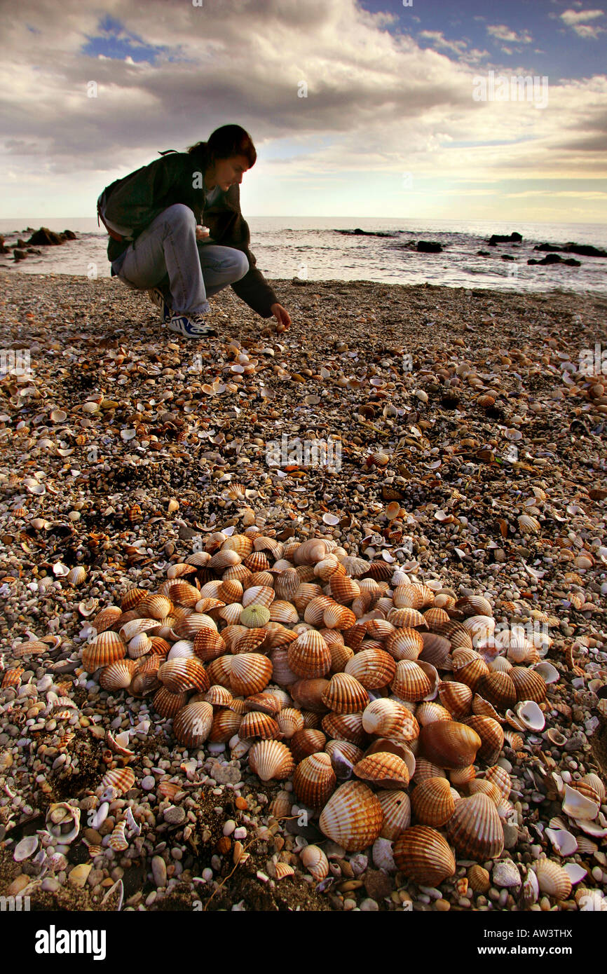 Sea shells collected from the Mediterrannean in Spain - Stock Image