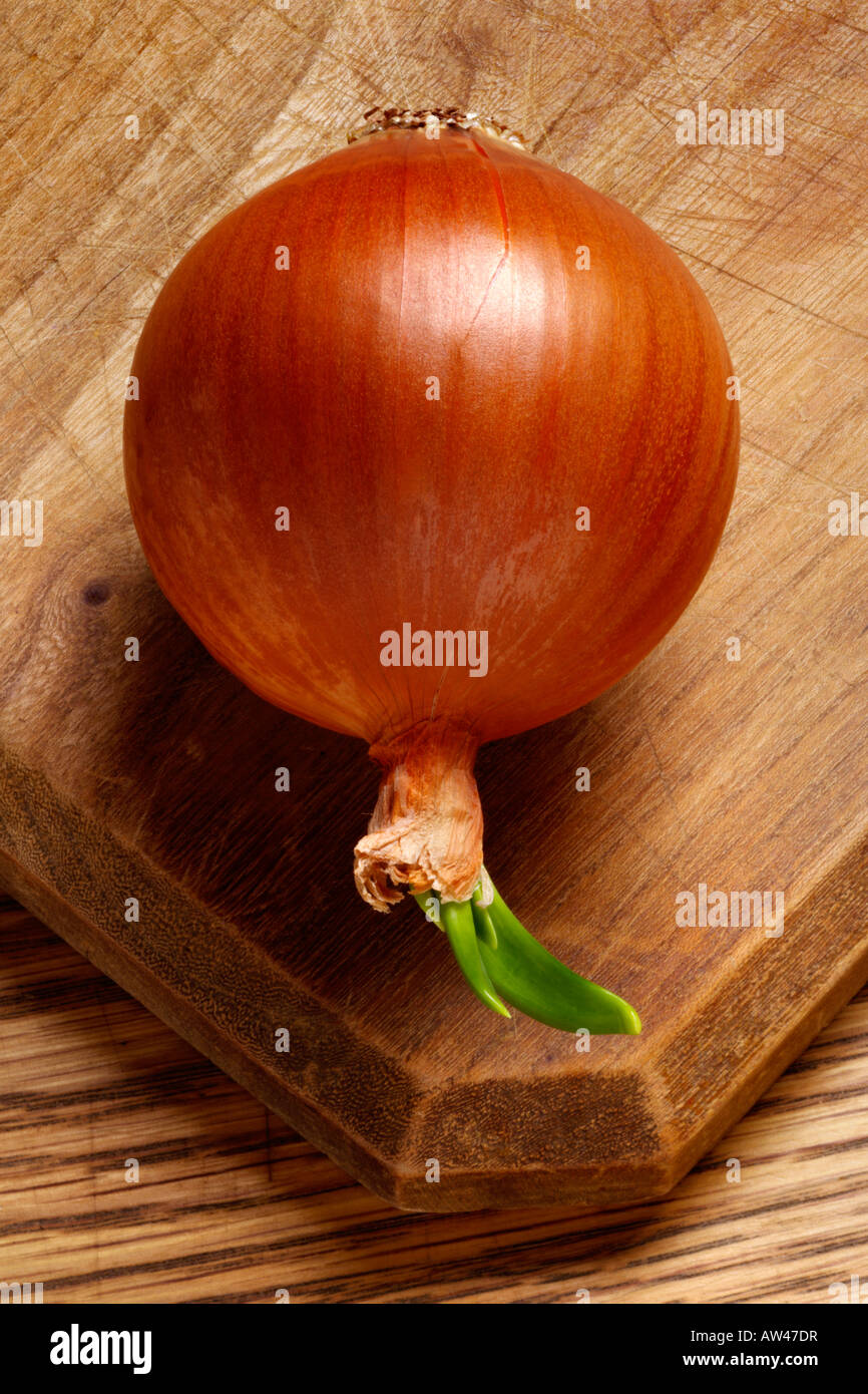 A sprouting onion. - Stock Image