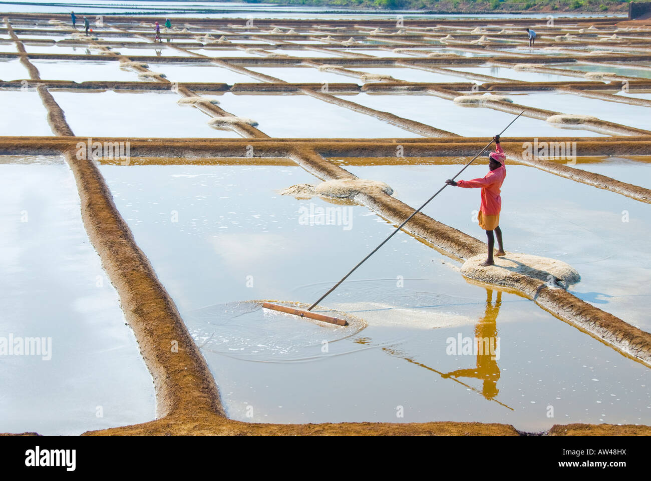 A man gathering sea salt from a salt pan in India - Stock Image