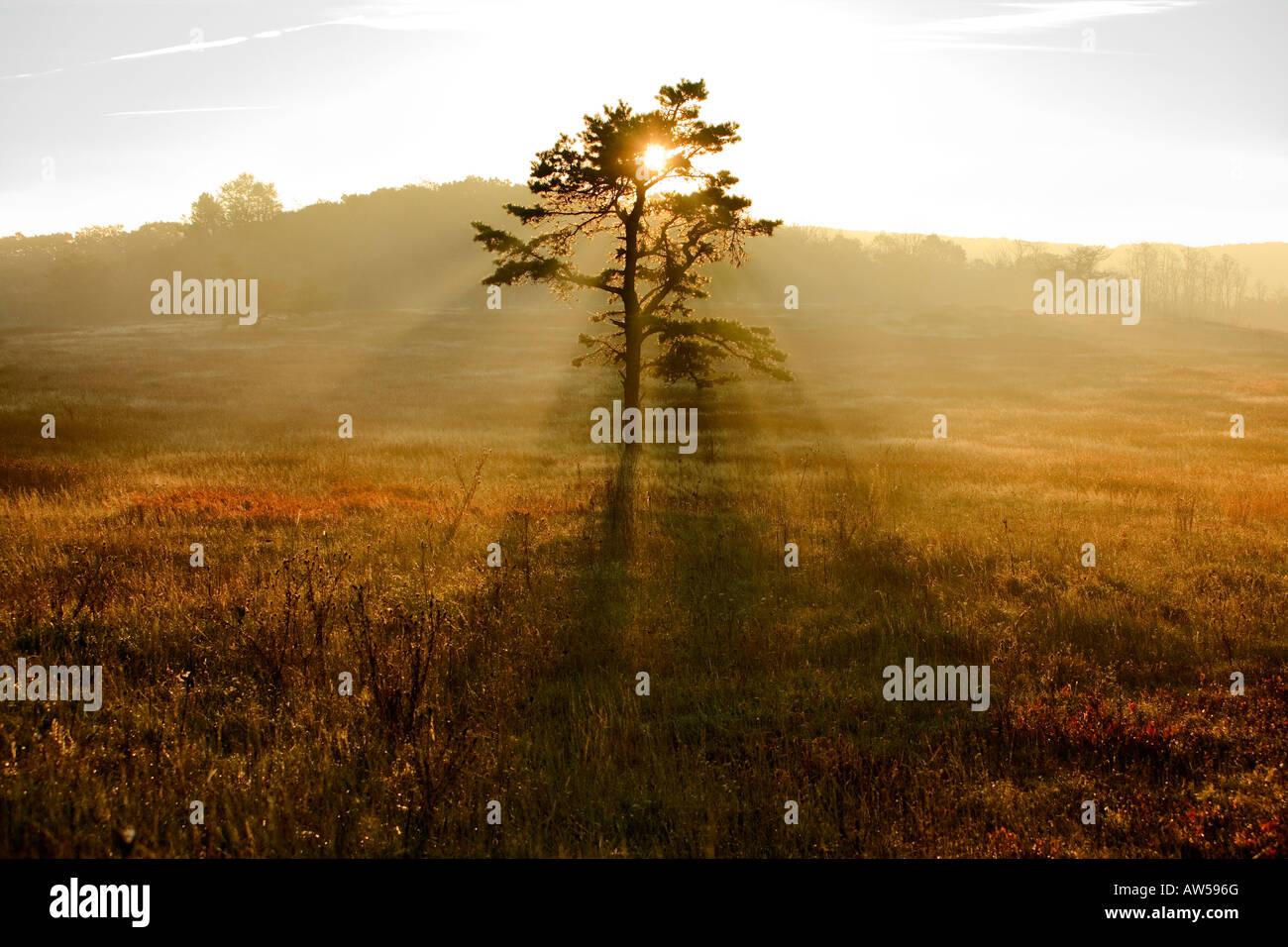 Big Meadow in Shenandoah National Park - Stock Image