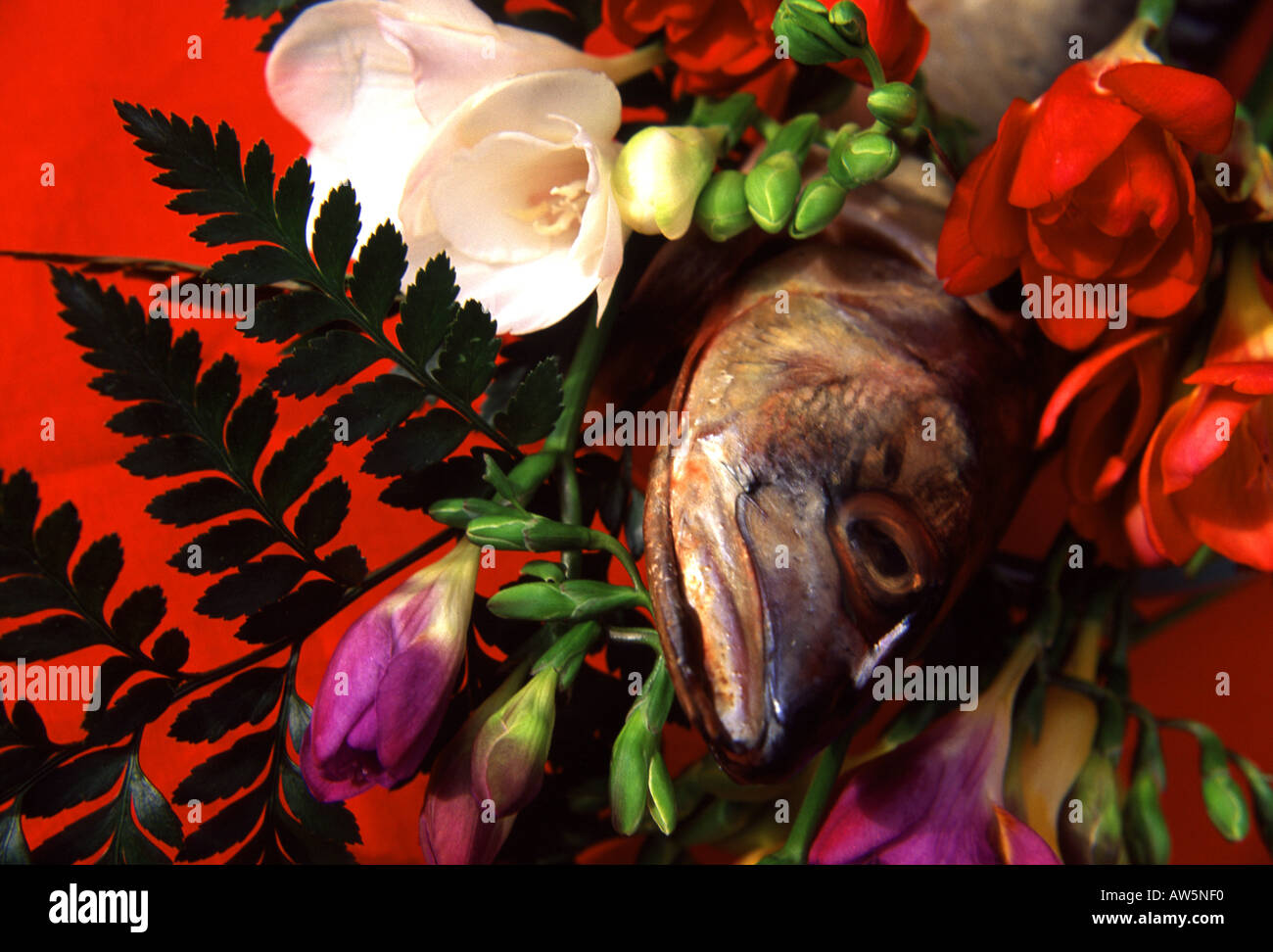 Whole dead fish emerging from bouquet of beautiful flowers against red background - Stock Image