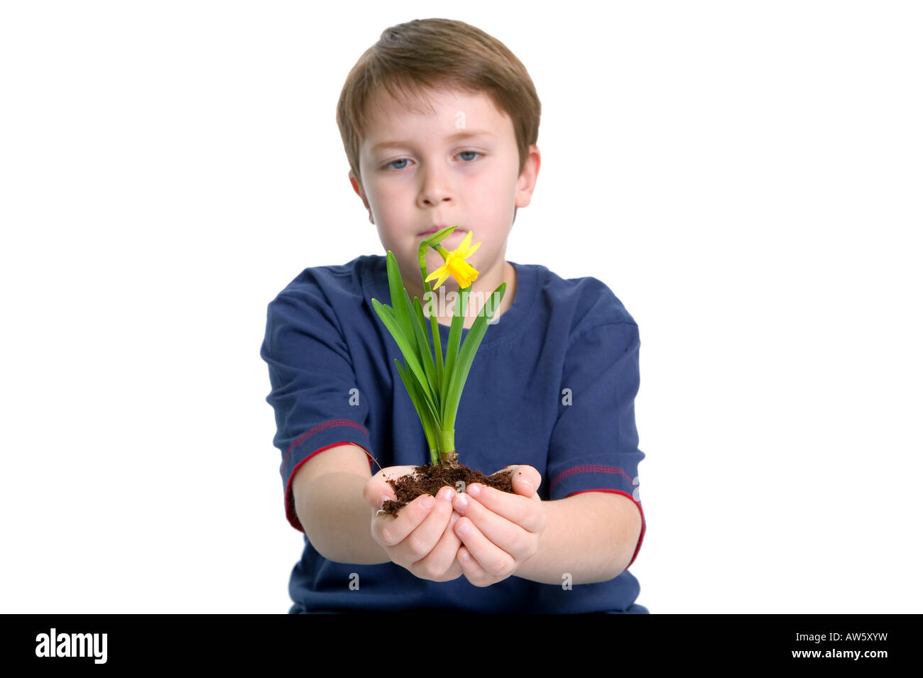 A young boy looking at a daffodil he is holding in outstretched arms shot against a white background Stock Photo