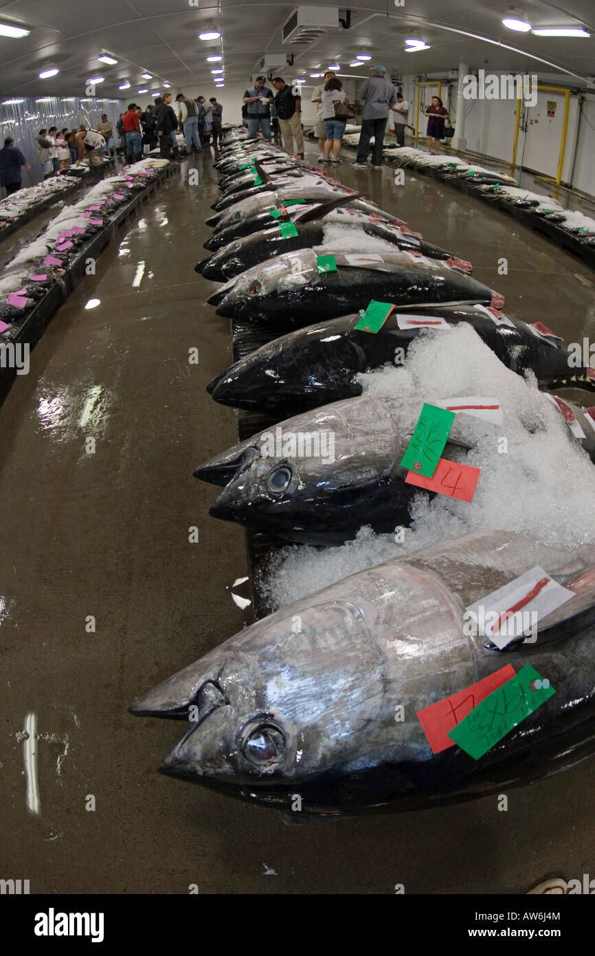 An early morning fish auction on Oahu's waterfront, Hawaii. - Stock Image